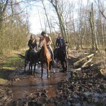 Die Pferde nutzen die Pütze für eine Plantschrunde..