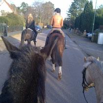 Auf dem Rückweg ging es eine Zeit lang durch eine Wohnstrasse- die Pferde ließen sich nicht aus der Ruhe bringen!