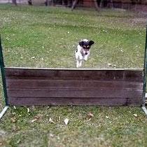 Sprung über die Hürde