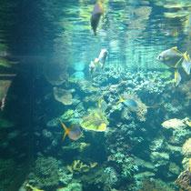 Aquarium im neuen Gorilla-Haus