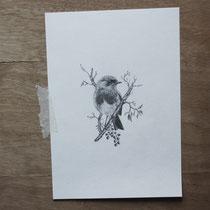 Rotkehlchen, Graphit auf Papier, 2017