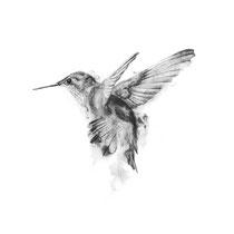Kolibri, Graphit auf Papier, 2017