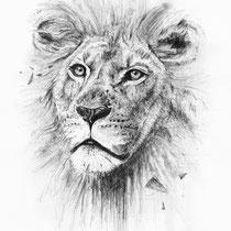 Löwe, Graphit auf Papier, 2015
