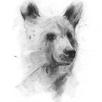 Grizzly, Graphit auf Papier, 2018
