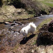 Herrlich kühl und das Wasser ist besonders gut!