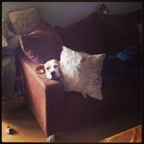 Jamie, völlig fertig zu Hause :)