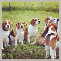 Sitzstreik bei Sam, Lady, Kalle, Jamie, Eddy, Murphy