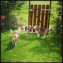 Jamie, Paula und Eddy auf der Suche nach dem Ausgang!?
