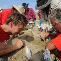Vorsichtige Ausgrabungen ermöglichten das fast vollständige Skelett