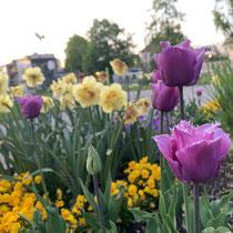 Flowers in Hohenems