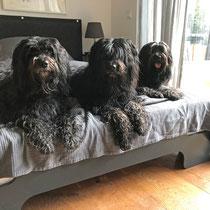 Lucie, Svante, Bailey - November 2019