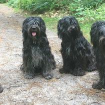 Neo, Lucie, Bailey, Svante - 2018