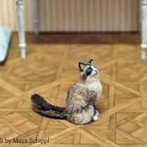 1:12 RAGDOLL CAT