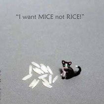 "MICRO KITTY ""MICKI"""