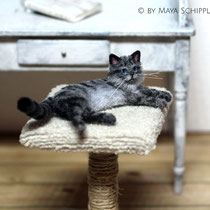 RELAXED GREY 1:12 CAT