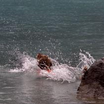 Trast landet im Wasser