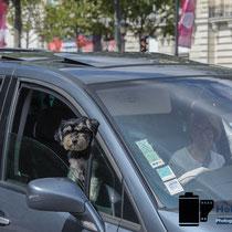 Zu Besuch in Paris - Frische Luft für den Hund © Holger Hütte 2014