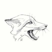 """""""Kitsune"""" - © Lisa »Miss Felidae« Arnberger"""