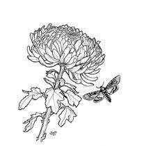 """Chrysantheme"" - © Judith Köster"