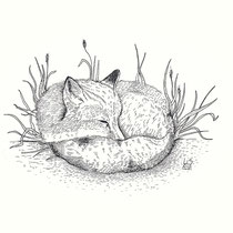 """Sleeping Fox"" - © Lisa »Miss Felidae« Arnberger"