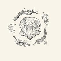 """""""Birdskull 1"""" - © Lisa »Miss Felidae« Arnberger"""