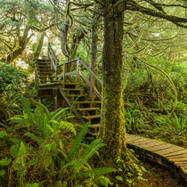 Vancouver Island Rainforest Trail bei Tofino