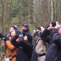 Exkursion 50 Vögel, April 2019