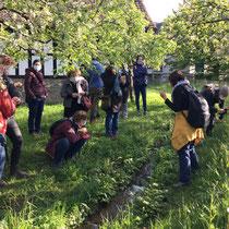 «Quartierrundgang - Essbare Wildpflanzen», April 2021