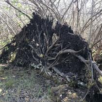 «Ausfliegen mit Gimpel», Schutzgebiet Wildert bei Illnau, April 2020
