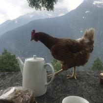 Frühstück auf der Alpe di Doro, Juni 2021