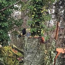 «Ausfliegen mit Gimpel», Entlang dem Hauserkanal, Februar 2021