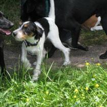 Die Hunde in der Hundeschule werden auch immer größer -