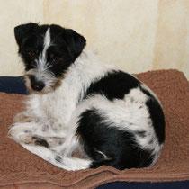 Jette, 14 Monate alt