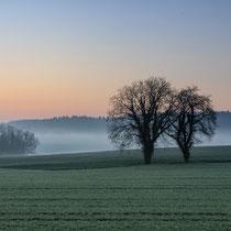 Nebelmorgen bei Odenheim