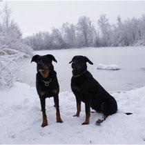 Gila (links) und  Bonny (rechts) im Winter am Gänsweidsee
