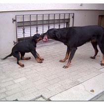 Gila (links) und Bonny (rechts) beim Spielen