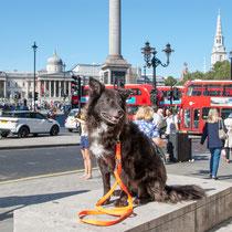 Mit Hund am Trafalgar Square, London, England