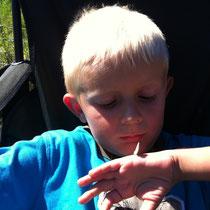 Luca liebt Schmetterlinge