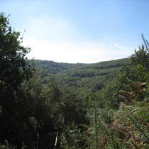 Vue sur les Montagnes Noires depuis le Roc'h-Hir