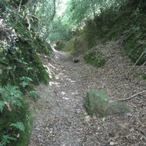 Chemin creux au pied du Roc'h an Ankou