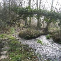 Ruisseau de Meil Gledig à Pont Trapier