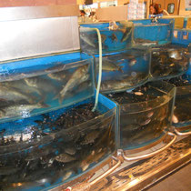 Tierschützer Ahoi! - Lebende Fische im Supermarkt....