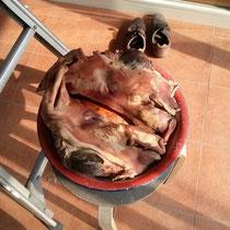 … Ja, und da sah der Schweinskopf nicht mehr so appetitlich aus, sondern eher eklig… leicht