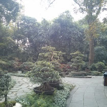 In einem der zahlreichen Gärten gab es Mini-Bäume. So süß! Man hat sich wie in Avatar gefühlt!