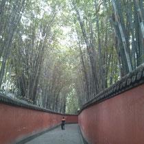 Bis man zum Kaisergrab gelangte, musste man erst diesen ewig langen Weg entlanglaufen - der wie ich finde richtig schön chinesisch ausschaut, mit Bambus und so ;)