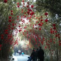 Eingang zum Pandazoo - mit wunderschön geschmücktem Bambus!