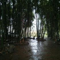 Echter Bambus, der einfach nur riiiesig war. Ich hab mich wie ne Ameise gefühlt :D