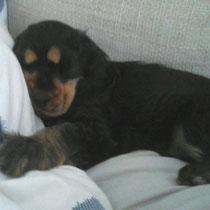 Polly auf dem Sofa!
