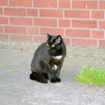 Liza - Juli 2004