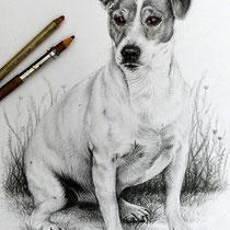 Portraitzeichnung eines Hundes mit schwarzem Buntstift